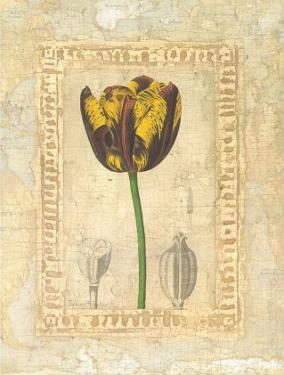 Tulipanes Bessa I by Javier Fuentes