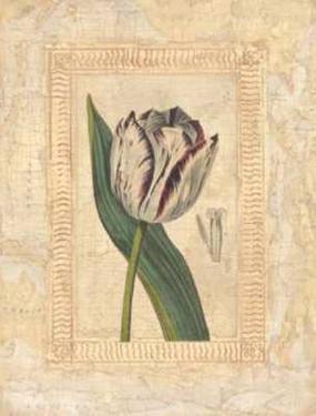 Tulipanes Bessa II by Javier Fuentes
