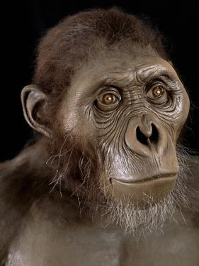 Australopithecus Afarensis by Javier Trueba