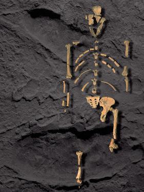 Footprints And Skeleton of Lucy by Javier Trueba
