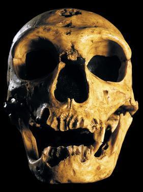 Neanderthal Skull by Javier Trueba