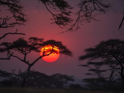 Dramatic Sky and Silhouette of Trees in Serengeti National Park by Jay Dickman