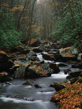 Stream Running Through Forest by Jay Dickman