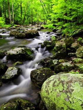 Creek Flows Through Forest, Shenandoah National Park, Virginia, USA by Jay O'brien