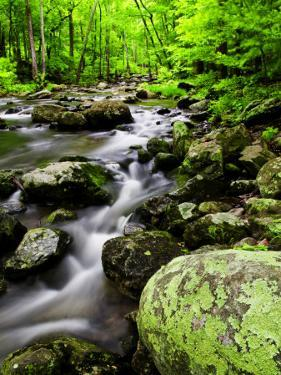 Creek Flows Through Forest, Shenandoah National Park, Virginia, USA by Jay O'brien