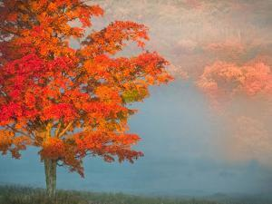 Mist and Forest in Autumn Color, Davis, West Virginia, Usa by Jay O'brien
