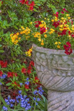 USA, Pennsylvania, Wayne, Chanticleer Garden. Flower Scenic by Jay O'brien