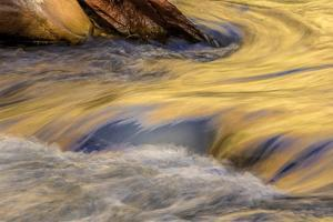 USA, Utah, Zion National Park. Autumn Reflections in Stream by Jay O'brien