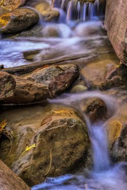 USA, Utah, Zion National Park. Rocks in Stream by Jay O'brien