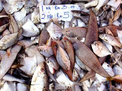 Assorted Fish Pile, Kuching Sunday Market, Kuching, Sarawak, Borneo, Malaysia