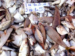 Assorted Fish Pile, Kuching Sunday Market, Kuching, Sarawak, Borneo, Malaysia by Jay Sturdevant