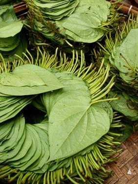 Betel Leaves (Piper Betle) Used to Make Quids for Sale at Market, Myanmar by Jay Sturdevant