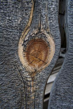California, Bodie State Park. Weathered Tree Knot by Jaynes Gallery