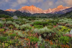 California, Sierra Nevada Mountains. Wildflowers Bloom in Valley by Jaynes Gallery
