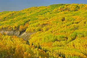 Canada, Alberta, Dunvegan. Autumn foliage in hills. by Jaynes Gallery