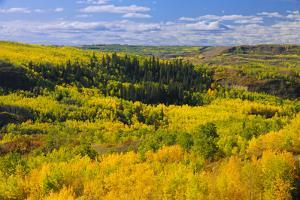 Canada, Alberta, Peace River. Autumn foliage in mountains. by Jaynes Gallery