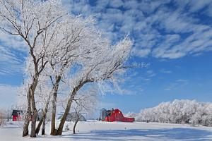 Canada, Manitoba, Hazelridge. Hoarfrost on trees and red barn. by Jaynes Gallery
