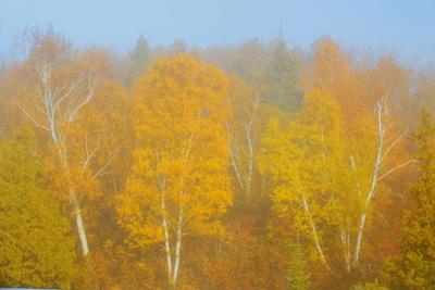 Canada, Manitoba, Whiteshell Provincial Park. Forest in autumn color and fog. by Jaynes Gallery