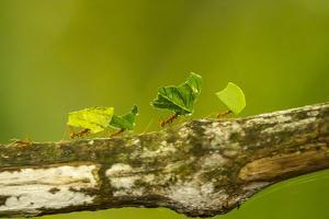 Central America, Costa Rica, Monteverde Cloud Forest Biological Reserve by Jaynes Gallery
