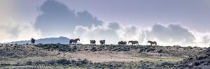 Colorado, Sand Wash Basin. Wild Horses in Silhouette by Jaynes Gallery