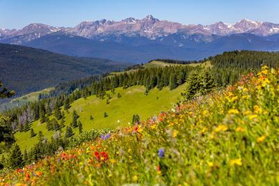 Colorado, Shrine Pass, Vail. Wildflowers on Mountain Landscape