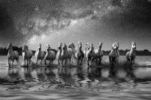 Europe, France, Provence, Camargue. Composite of Milky Way and horses running through water. by Jaynes Gallery