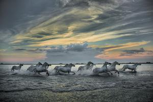 Europe, France, Provence, Camargue. Horses running through marsh at sunrise. by Jaynes Gallery