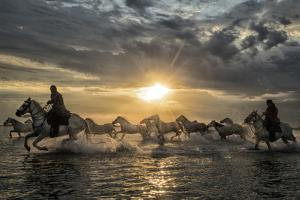Europe, France, Provence, Camargue. Horses running through water at sunrise. by Jaynes Gallery