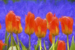 Europe, Holland, Lisse. Abstract of orange tulips in Keukenhof Gardens. by Jaynes Gallery