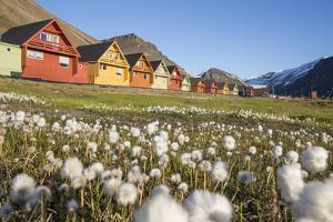 Europe, Norway, Svalbard, Longyearbyen. Colorful Houses and Cottongrass Field by Jaynes Gallery