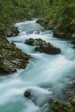 Europe, Slovenia, Bled. Radovna River in the Vintgar Gorge. by Jaynes Gallery