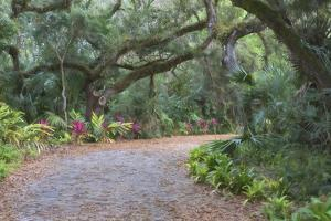 Florida. Road Through Old Trees and Vegetation by Jaynes Gallery