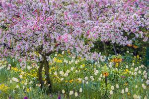 France, Giverny. Springtime in Claude Monet's Garden by Jaynes Gallery