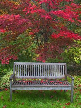 Garden Bench and Japanese Maple Tree, Steamboat Inn, Oregon, USA by Jaynes Gallery