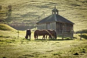 Horses and Old Barn, Olema, California, USA by Jaynes Gallery