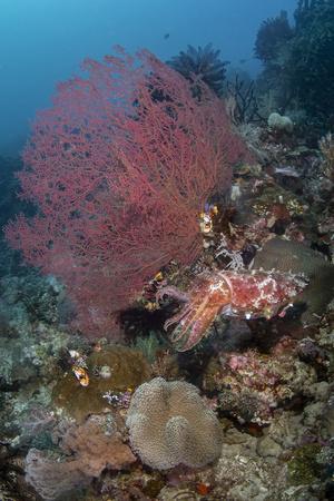 Indonesia, West Papua, Raja Ampat. Coral reef scenic.