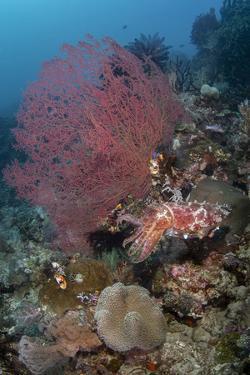 Indonesia, West Papua, Raja Ampat. Coral reef scenic. by Jaynes Gallery