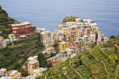 Italy, Manarola. Overview of town. by Jaynes Gallery