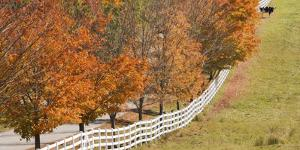 Maine, Pownal. Fenceline and Cow by Jaynes Gallery