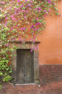 Mexico, San Miguel De Allende. Bougainvillea Outside Wooden Doorway by Jaynes Gallery