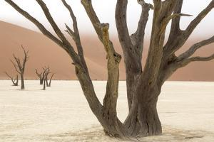 Namibia, Namib-Naukluft Park, Deadvlei. Dead camelthorn trees and fog. by Jaynes Gallery