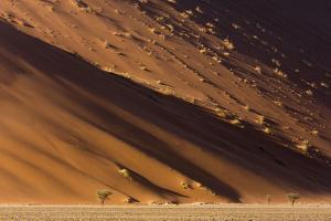 Namibia, Namib-Naukluft Park. Desert sand dune at sunset. by Jaynes Gallery