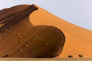 Namibia, Namib-Naukluft Park. Giant sand dune and trees. by Jaynes Gallery