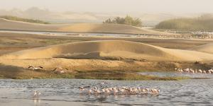 Namibia, Walvis Bay. Lesser flamingos gathering to feed. by Jaynes Gallery