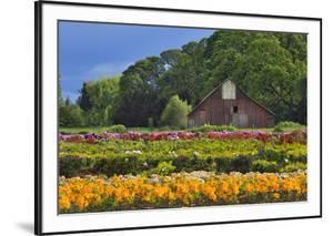 Old Barn and Flower Nursery, Willamette Valley, Oregon, USA by Jaynes Gallery