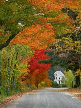 Road Lined in Fall Color, Andover, New England, New Hampshire, USA by Jaynes Gallery