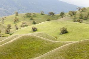 Smooth, Grassy Hills and Oak Trees, Caliente, California, USA by Jaynes Gallery