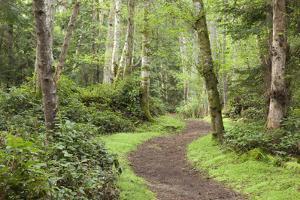 Trail Through Woods, Stuart Island, San Juan Islands, Washington, USA by Jaynes Gallery