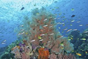 Underwater Scenic of Fish and Coral, Raja Ampat, Papua, Indonesia by Jaynes Gallery