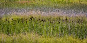 USA, Alaska, Anchorage. Scenic of Potter Marsh. by Jaynes Gallery